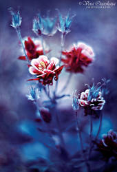 Fairy flowers by VeraOzerskaya