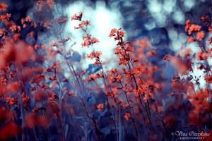 Red flowers by MilenaKalias