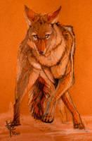 ::Coyote Study:: by RozlynnWaltz