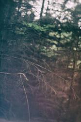 Trees by SimonVV