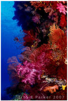 Coral Reef Riot by arterius