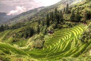 ricefields-Longji by Jekkiter