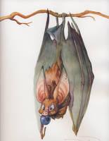 Commission 3 -- Fruit Bat by nebulafire
