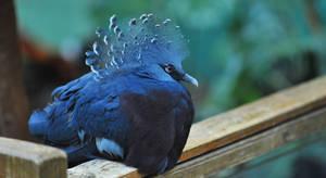 Blue bird, but not a bluebird. by barsknos