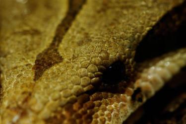 Snake Eye by barsknos