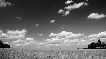 Summer Wheat Field by cybercake