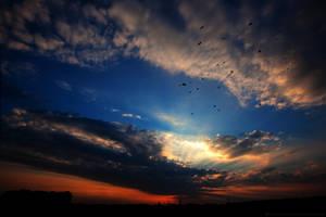 Bird's in the sky ... by KarabansRaven