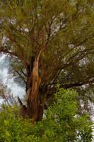 Baum-2 by KarabansRaven