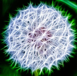 Pusteblume (dandelion) by KarabansRaven