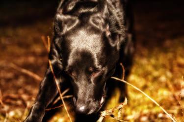My dog Balululu in the darkness :) by KarabansRaven