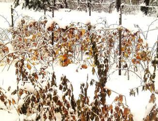 wintery harvest by akito-ash