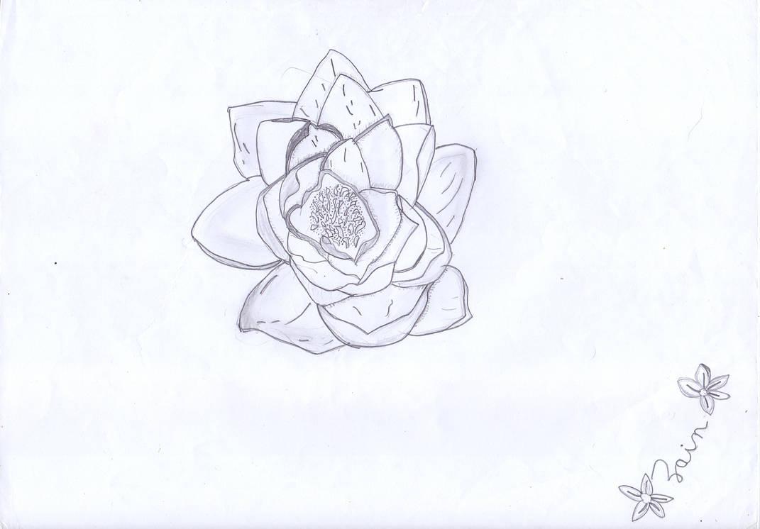 Random Flower by EragonShadeSlayers