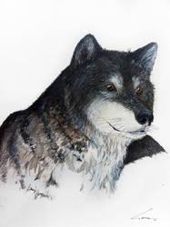 wolf by naihtsirk