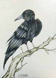 The Raven by tomgirl227