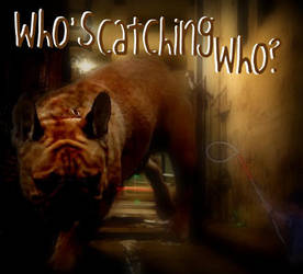 Who's Catching Who? by AshleeAddict