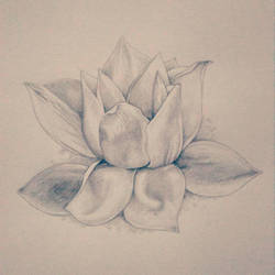 Lotus flower by whitebunnyart