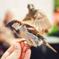 Berlin Birds by Sarah-BK