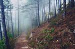 Der Nebelweber webt im Wald by only1second