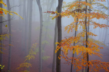 autumn mood by only1second