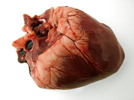 heart by shochinbugstock