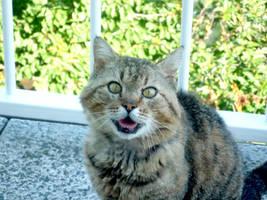 My cat wants to milk by czjoe