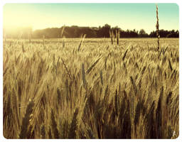 Feels like summer by Gravitatioon