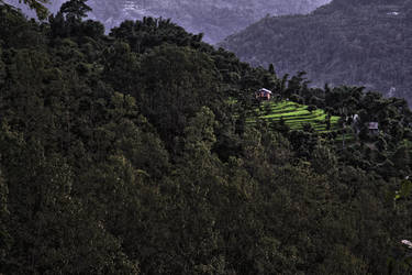 Forest Village in Kalimpong by bingbing51