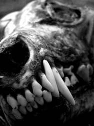 Cainine Skull by adriftphotography