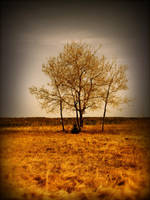 Dusty Beach Tree by suricata5