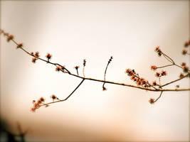 Antique Branch by suricata5