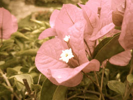 Antique Looking Flowers by photographybymia