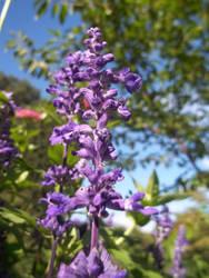 Tall Purple Flower by photographybymia