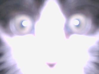 Hypno-cat by skyshroudfalcon
