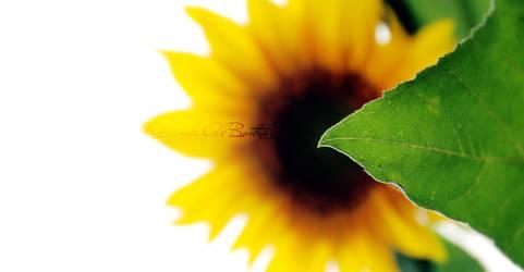 This Flower.. by Orangish