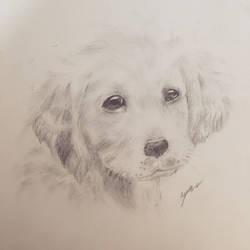 Dog by awesomehero43