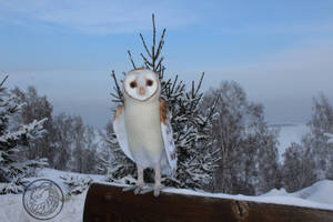 Big Barn owl by Sillykoshka