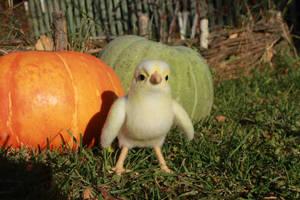 Chick (baby hen) 3 by Sillykoshka
