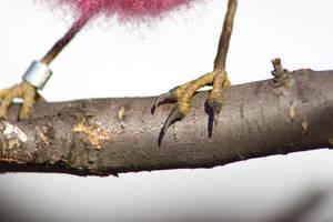 Pink robin feet by Sillykoshka