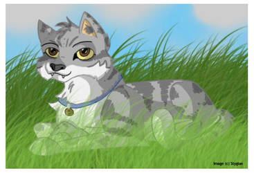 Grey Tabby by intolart