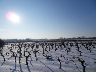 Vignes sous la neige by BananaImpact