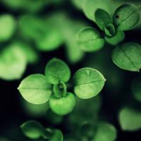 Zielono,zielono mi. by 6Artificial6