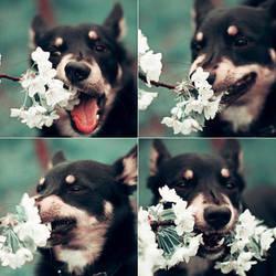 dog psychopath by 6Artificial6