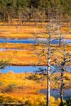 Autumn bog by Behindmyblueeyes
