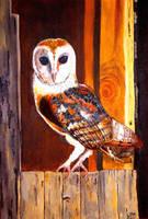 Barn Owl by WendyMitchell