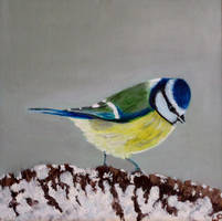 Blue tit in the snow by WendyMitchell