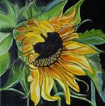Sunflower by WendyMitchell
