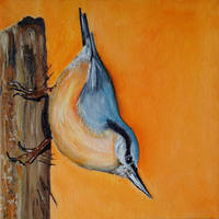 Nuthatch by WendyMitchell