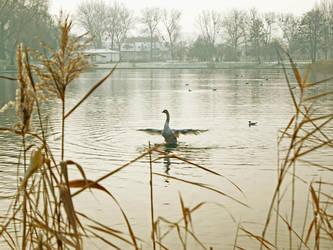 King of pond by thegreeneye