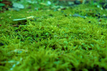 Moss by theathethird