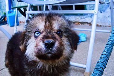 Mighty Pupper Doggo by theathethird